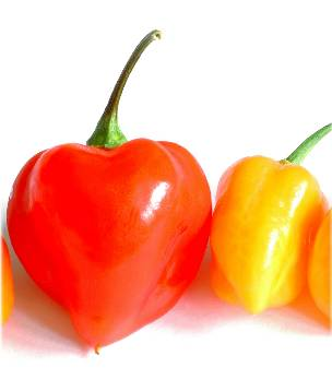 Scoville Units and What they Mean