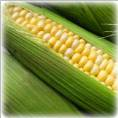 Microwave Corn On The Cob Recipe